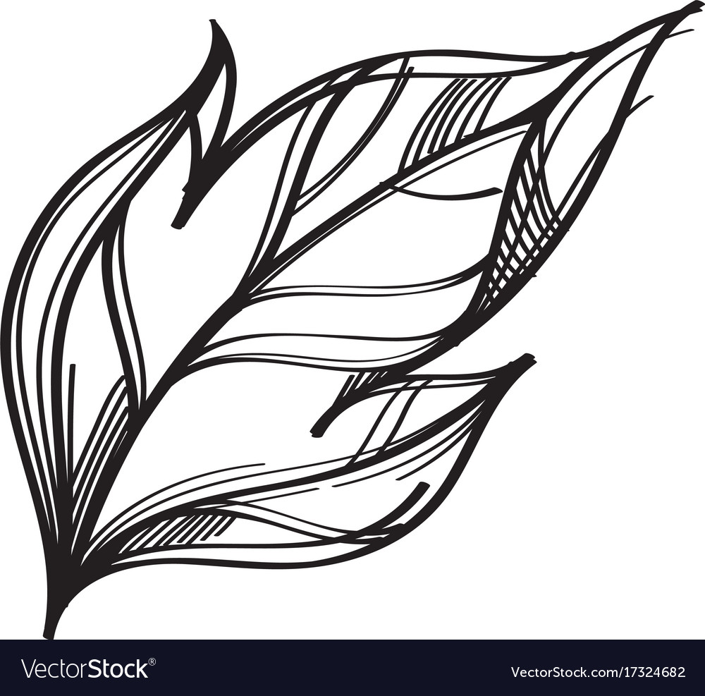 Hand drawn leaf outline isolated on white