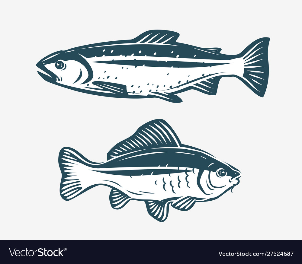 Fishs such as trout and carp fishing concept