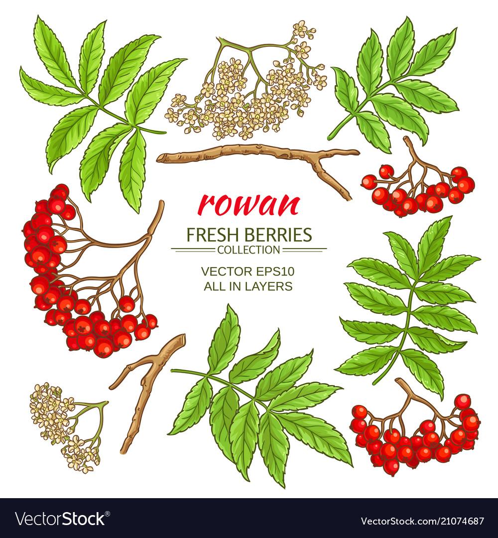Rowan elements set