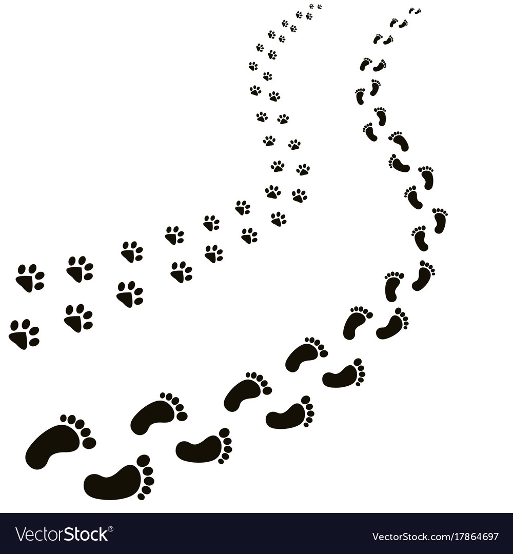 Animal and human footprints isolated in white