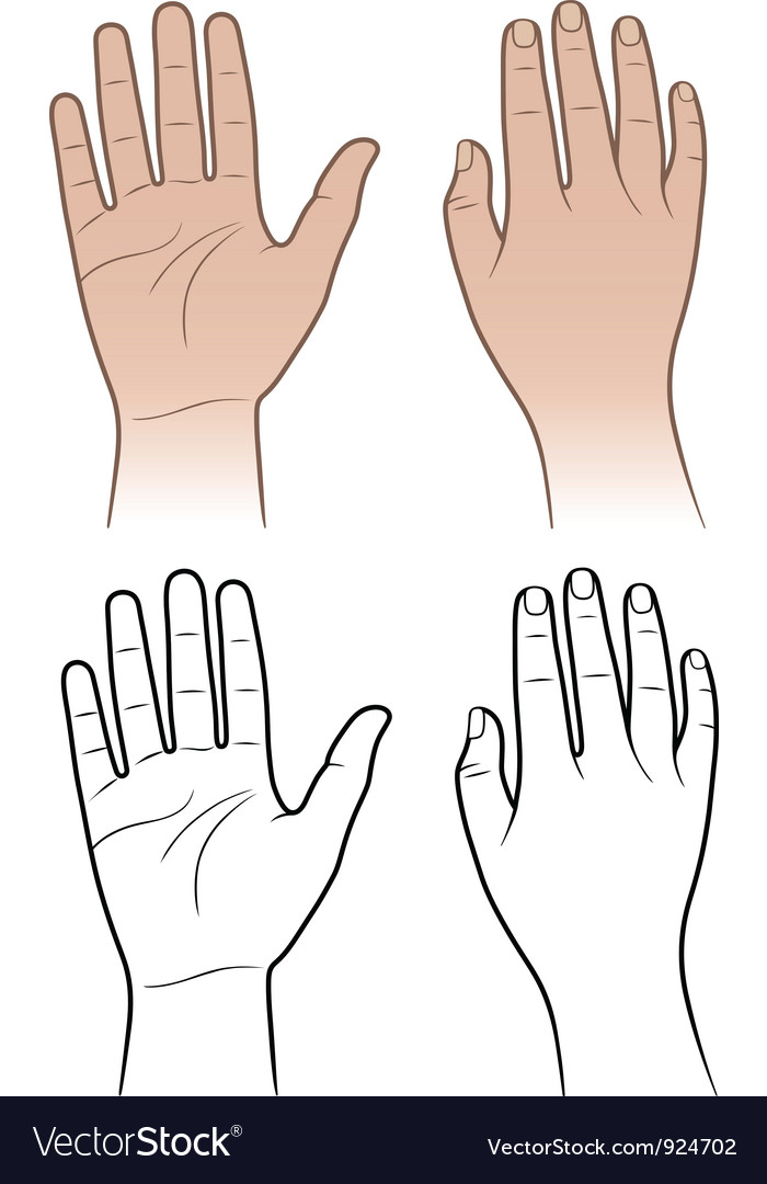 Woman man hands isolated on white vector image