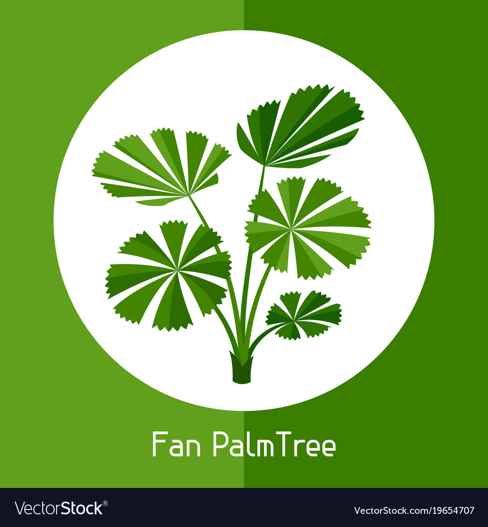 Fan palm tree of exotic tropical vector image