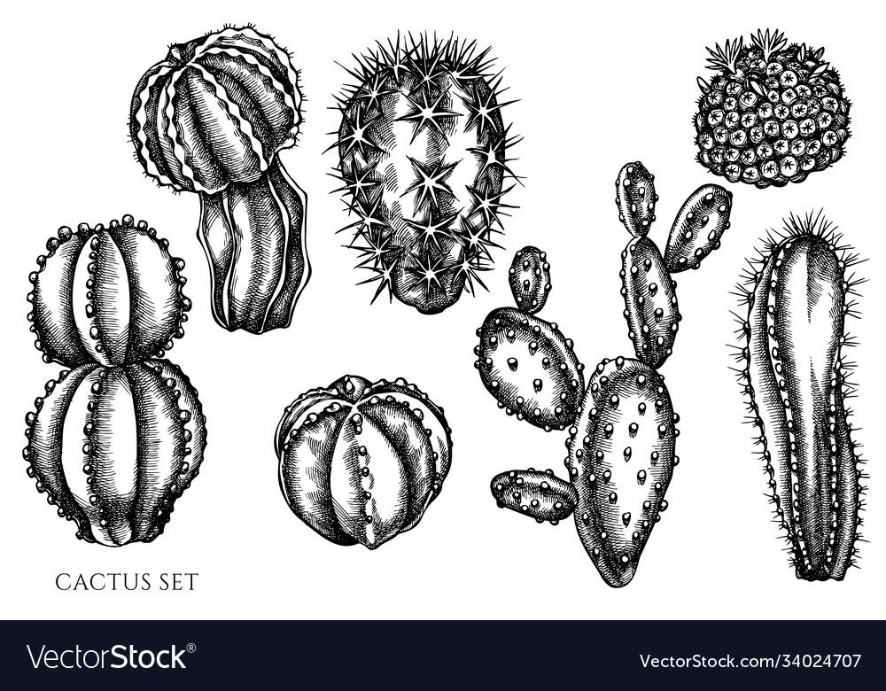 Set hand drawn black and white cactus