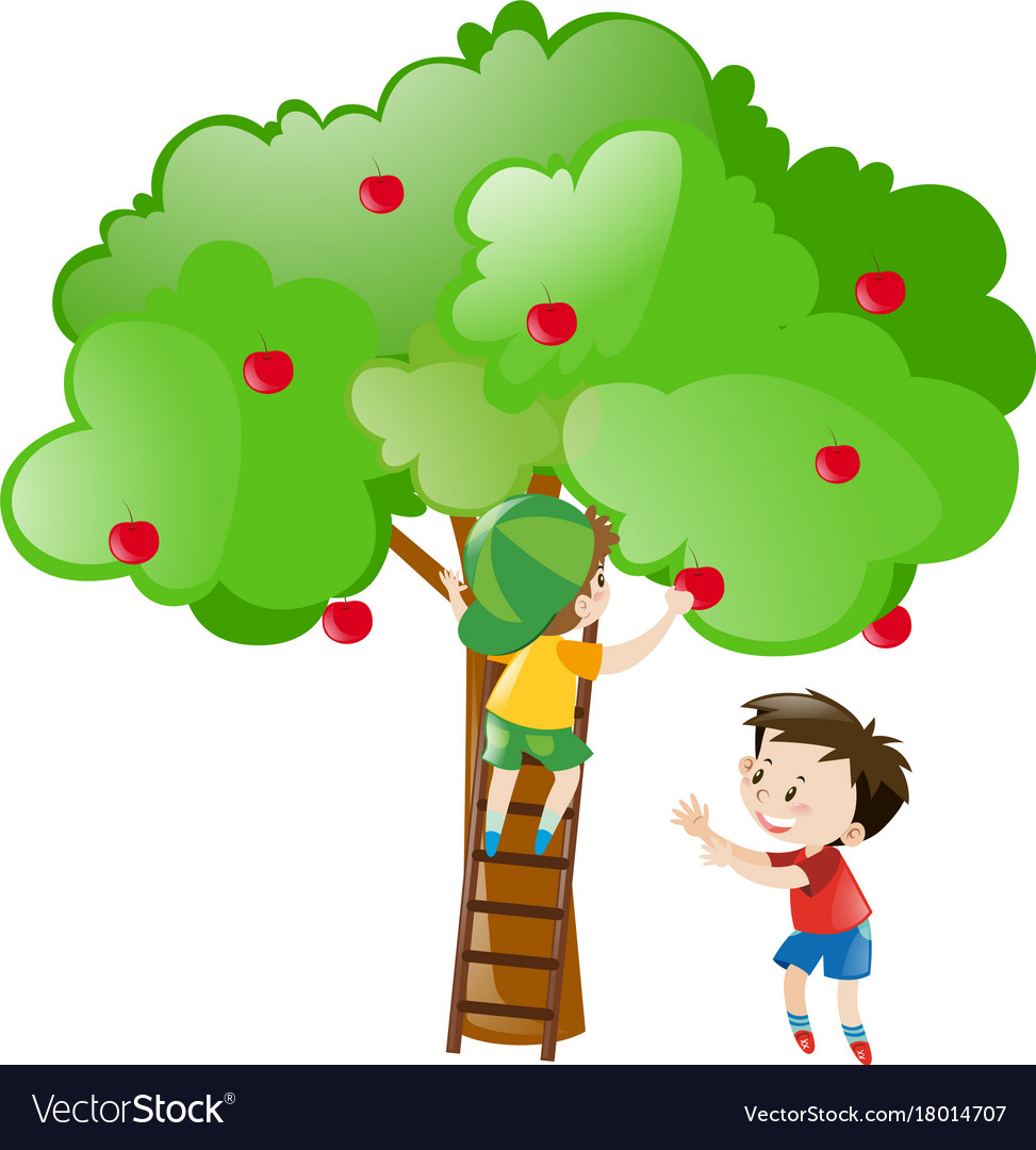 Two Boys Picking Apples From Tree Royalty Free Vector Image