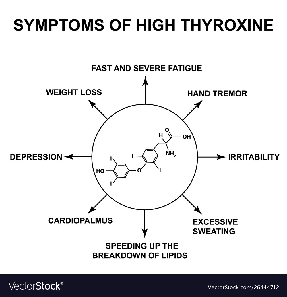 Symptoms High Thyroxine Thyroxine Thyroid Vector Image