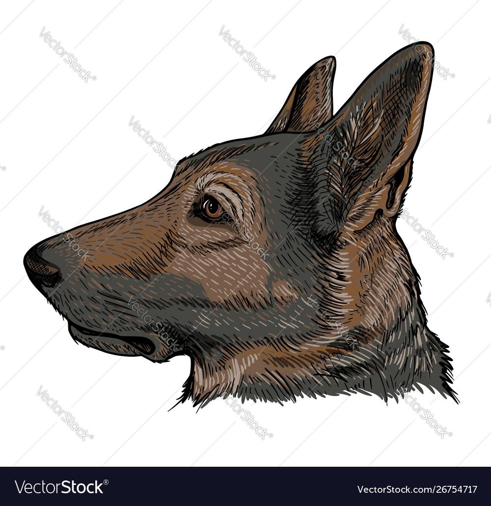 Portrait German Shepherd Dog Royalty Free Vector Image