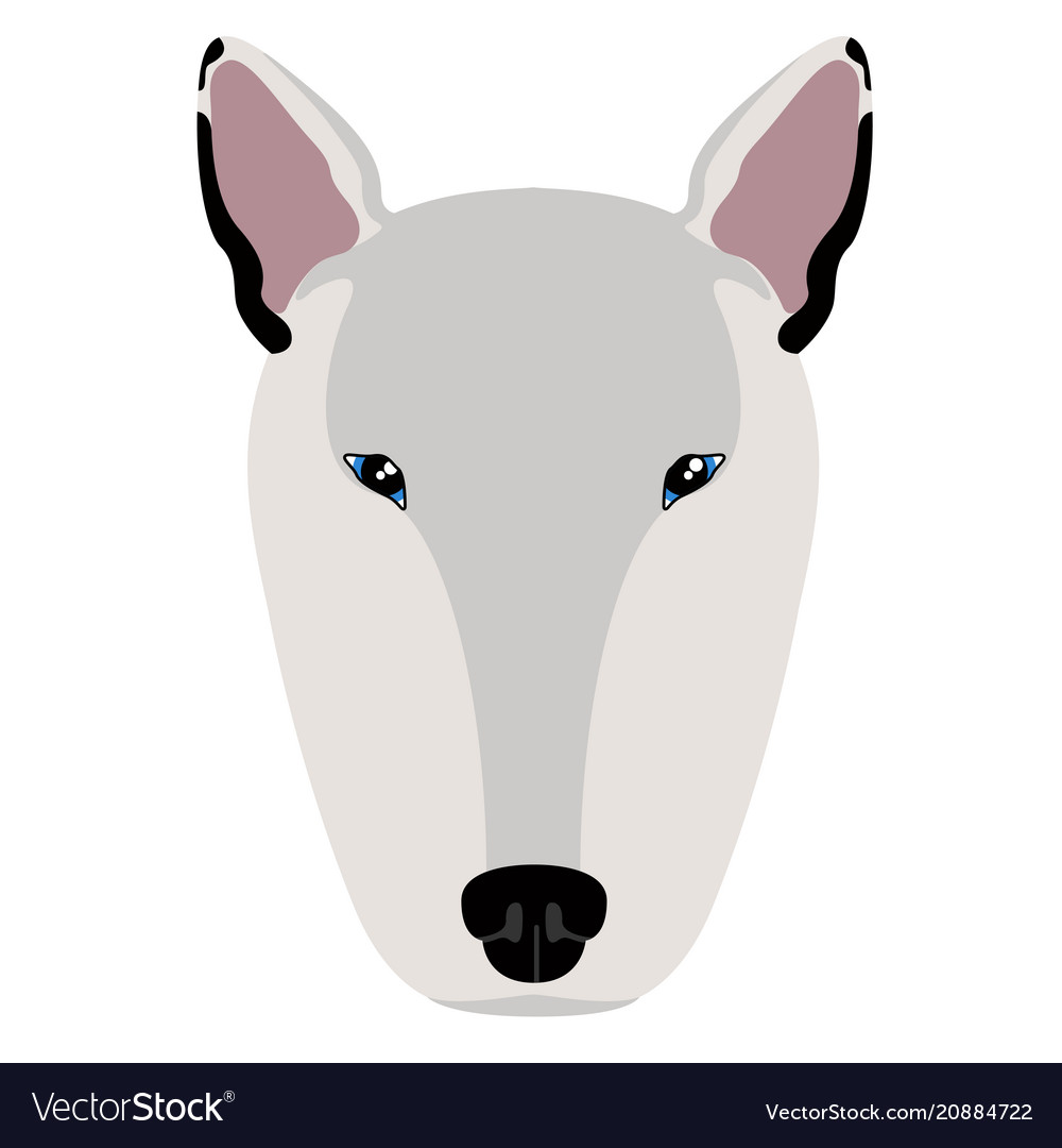 Bull terrier avatar
