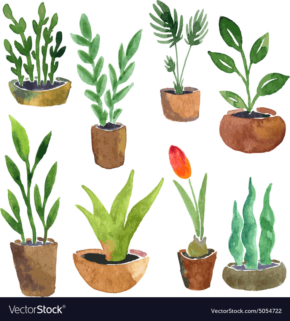 Watercolor Drawing Home Plants Royalty Free Vector Image