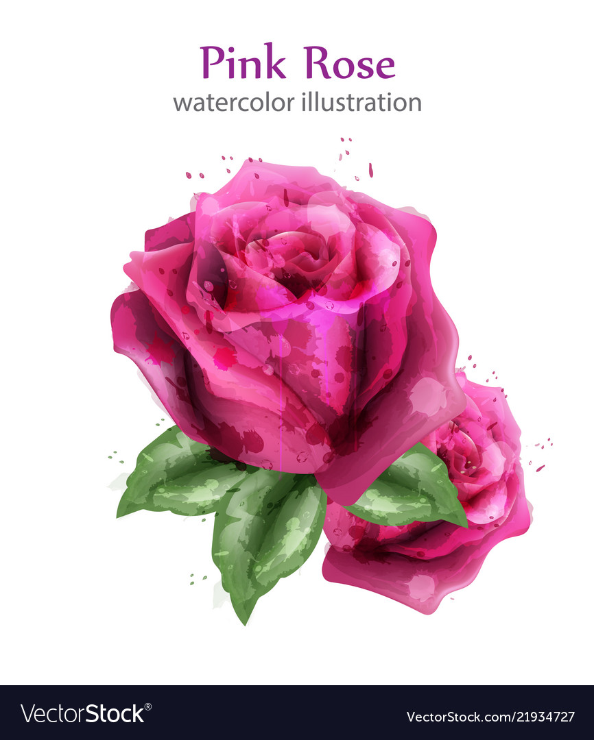 Watercolor roses background beautiful