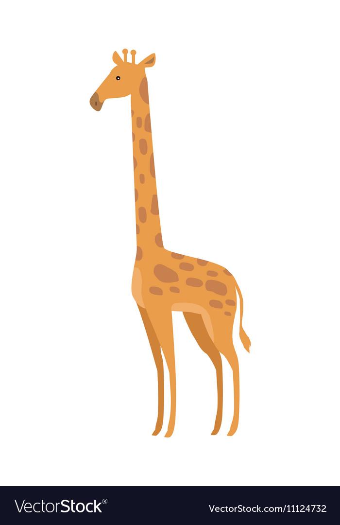 Giraffe Giraffa Camelopardalis Cartoon Animal vector image