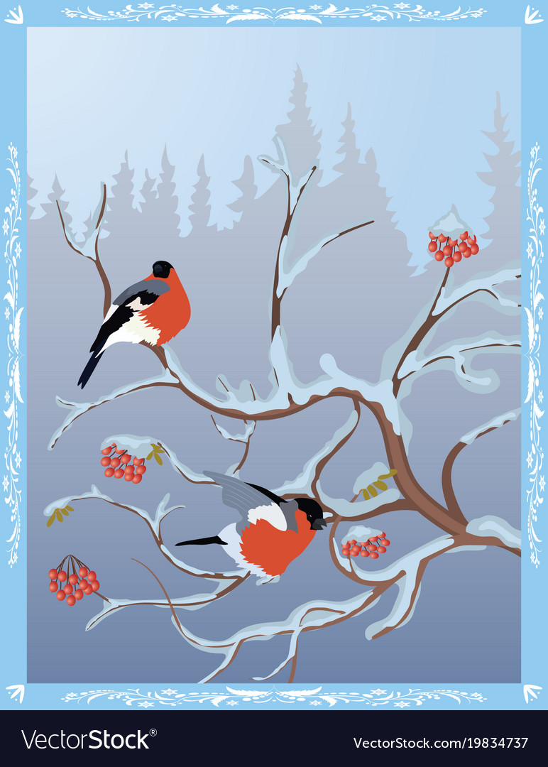 Winter postcard with bullfinches