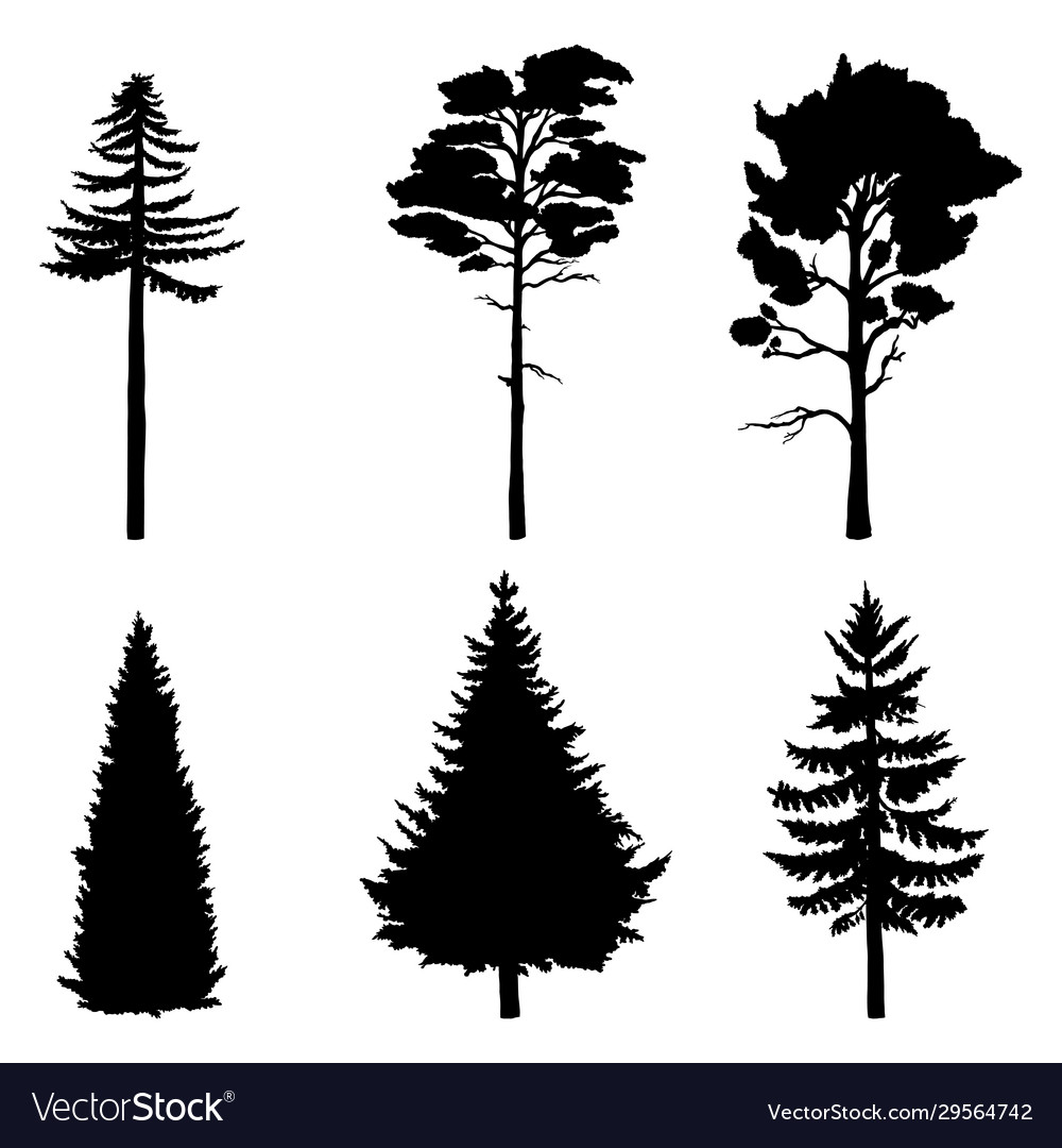 Set pine trees black silhouettes