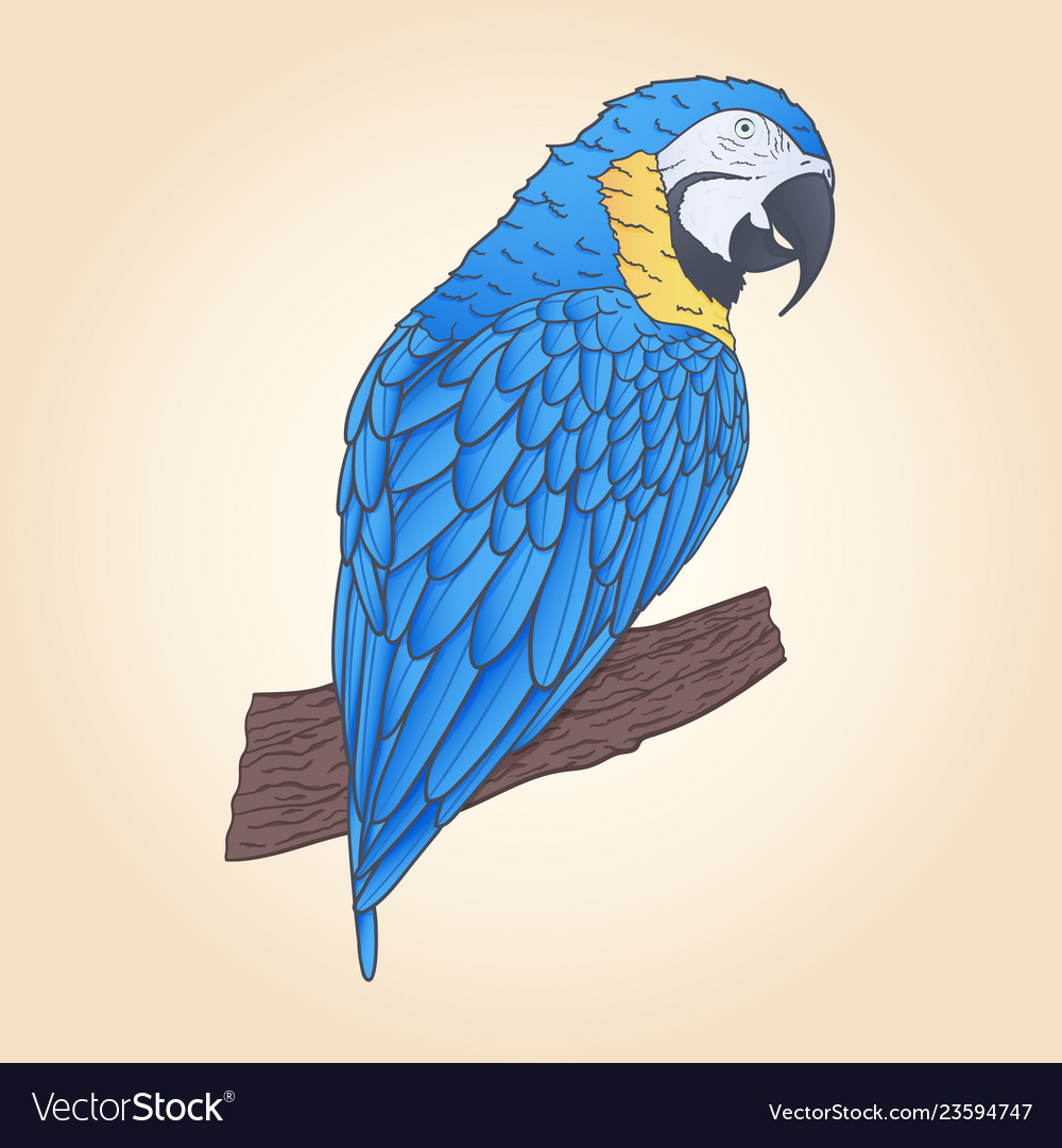 Hand drawn macaw parrot sitting on branch