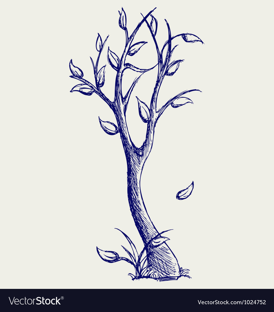 Trees silhouettes vector image