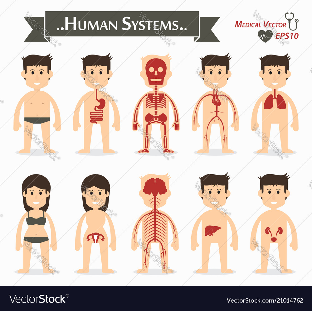 Human systems flat design vector