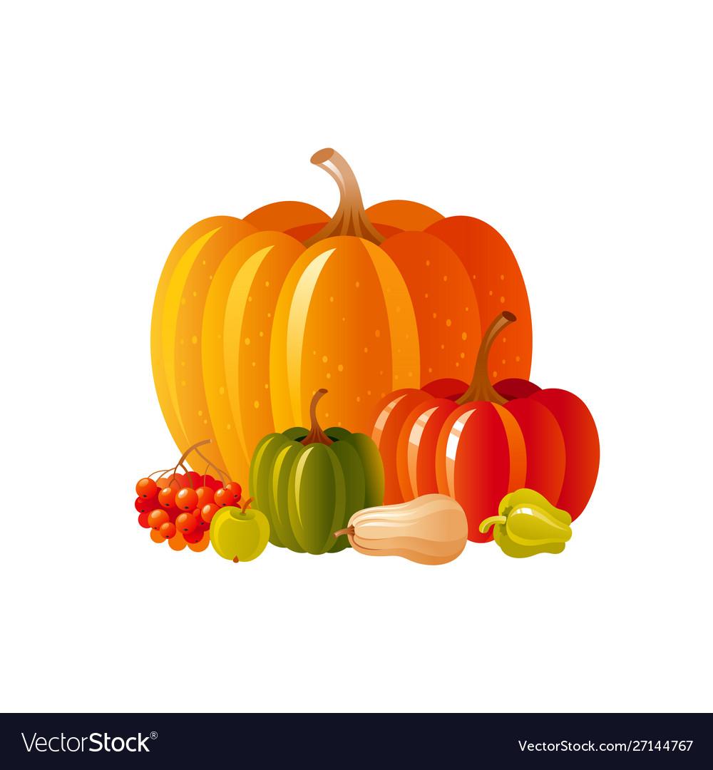 Autumn fall pumpkin icon for harvest festival or
