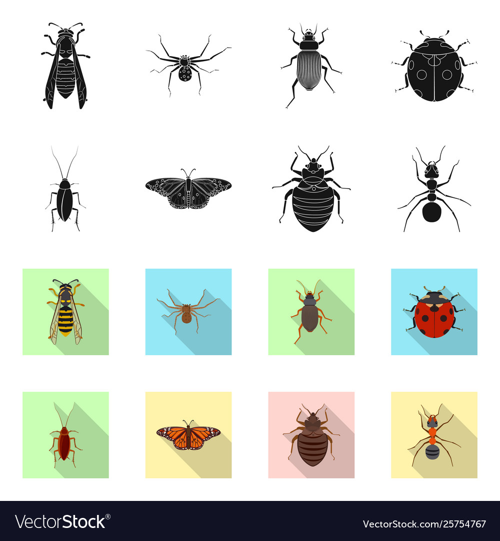 Design insect and fly symbol collection