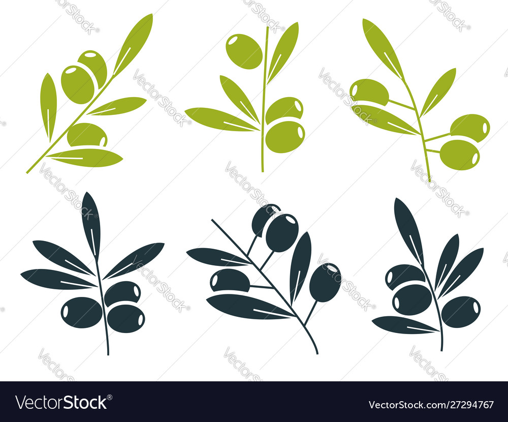Green and black olive branches icons