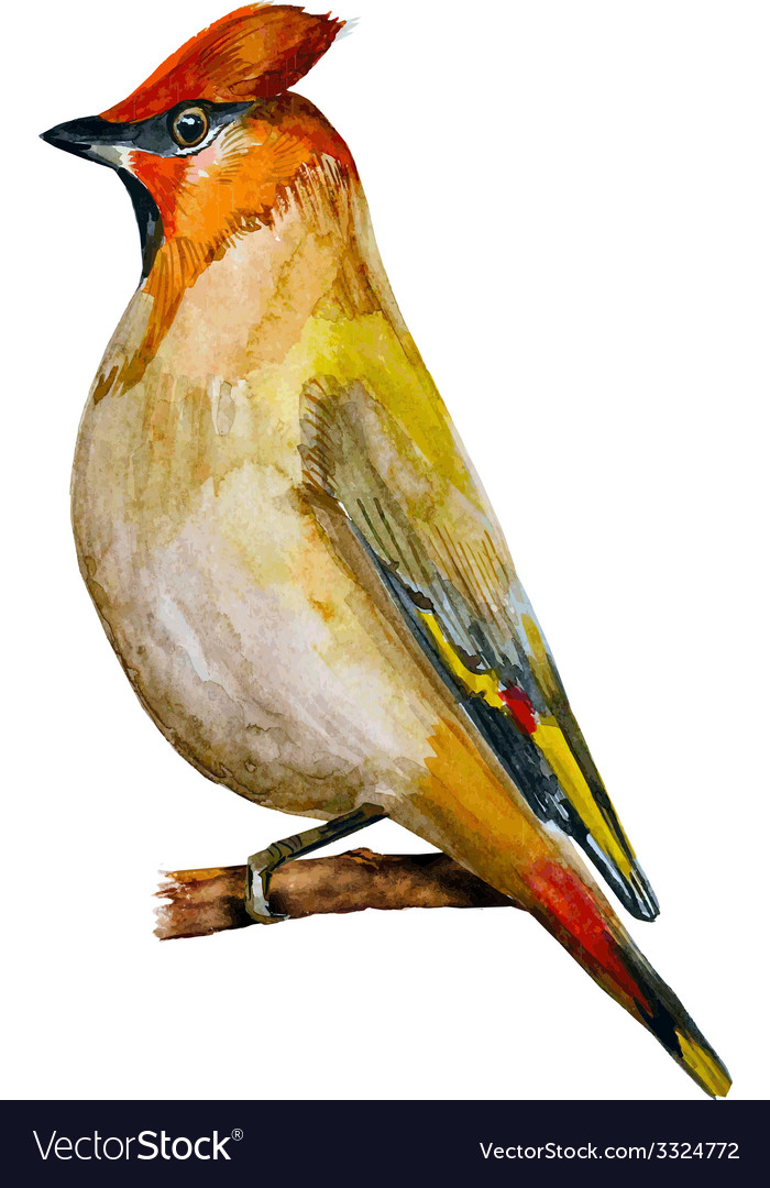 Watercolor painting bird