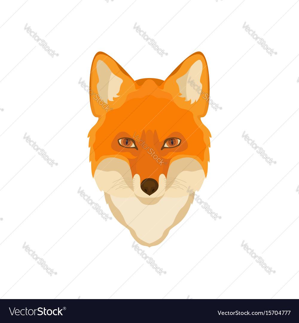 Orange fox head image wild animal wildlife