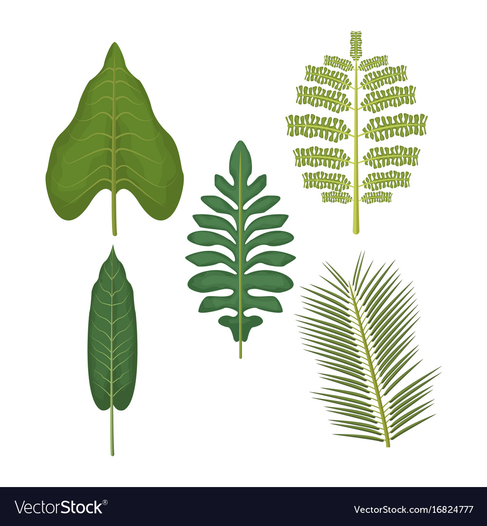 White background with set of palm leaves vector image