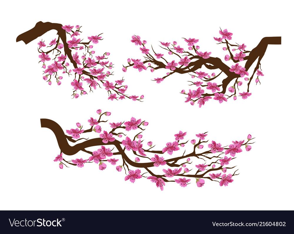 Realistic sakura japan cherry branch with