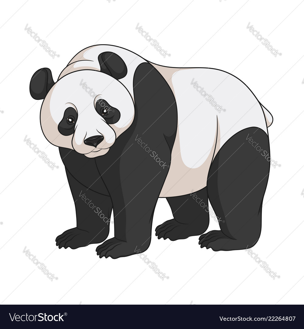 Color image of a panda isolated object