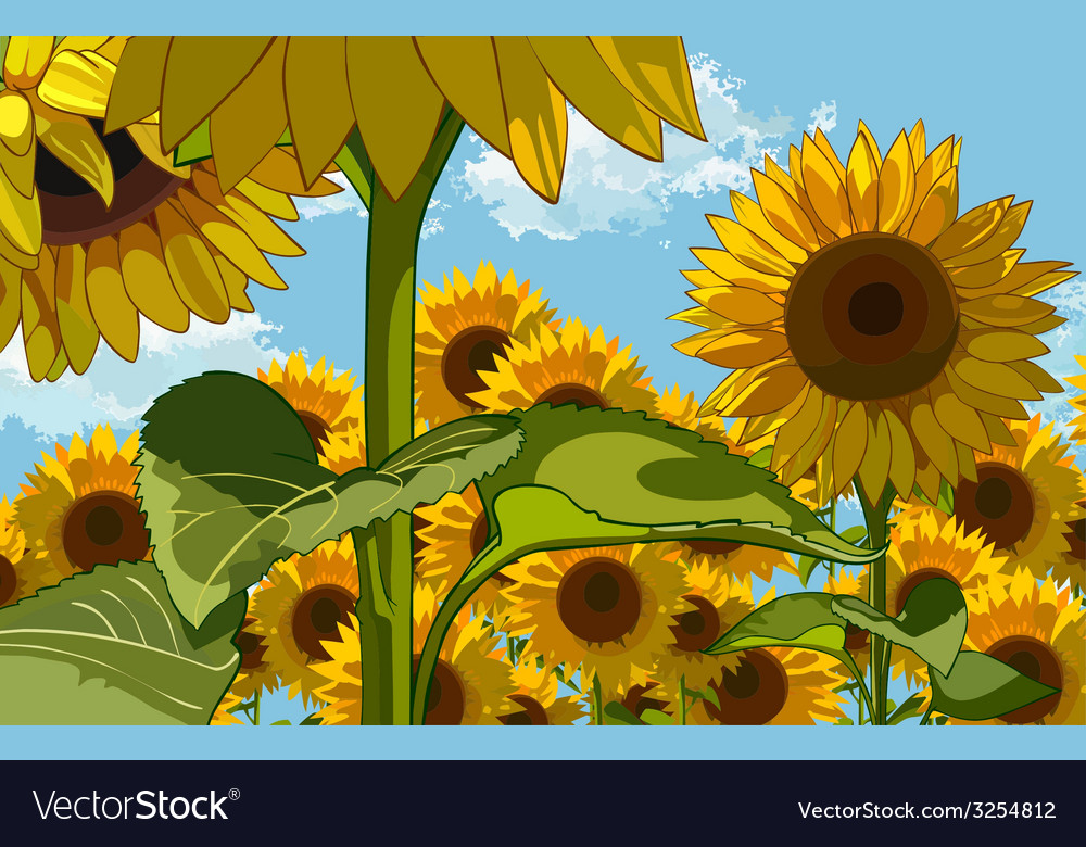Field Of Flowers Of Sunflowers Royalty Free Vector Image