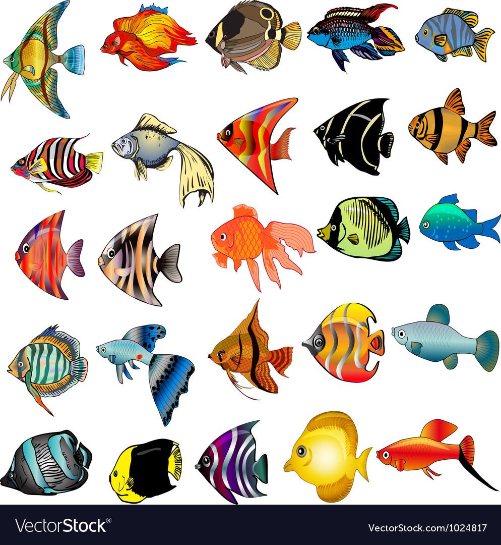 Tropical Fish Set Royalty Free Vector Image Vectorstock