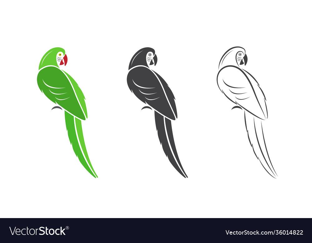 Parrot design on white background