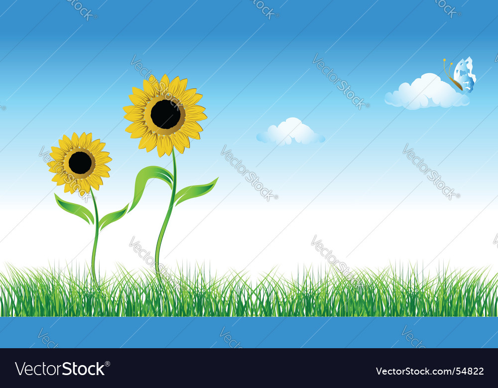 Sunflower on green field