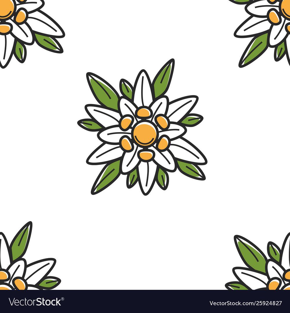 Edelweiss wild flower austrian symbol seamless