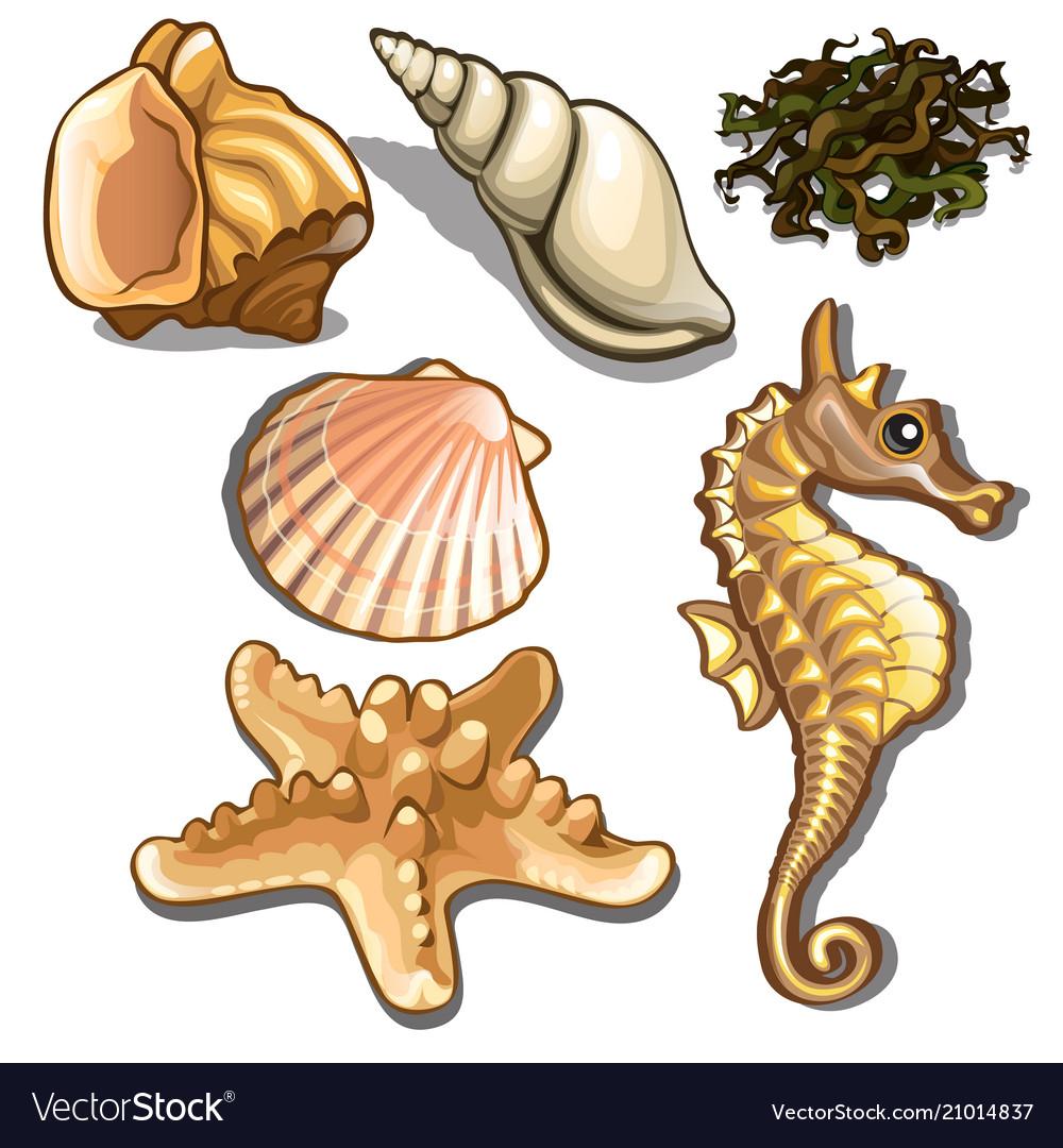 Set of sea animals isolated on white background