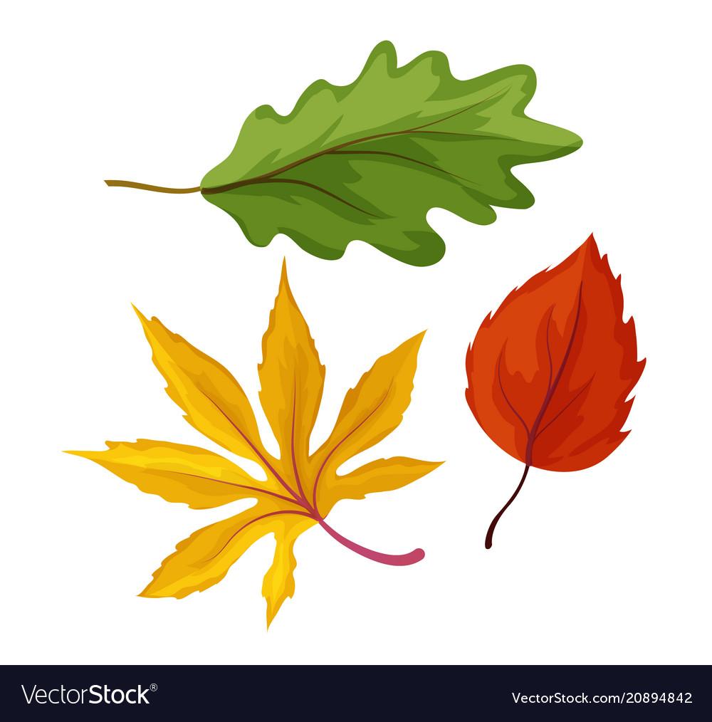 Sketch autumn leaves set