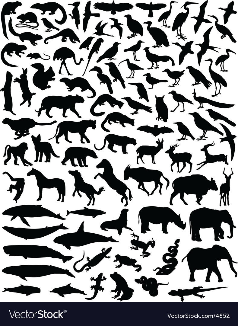 outlines of animals. Animal Outlines Vector