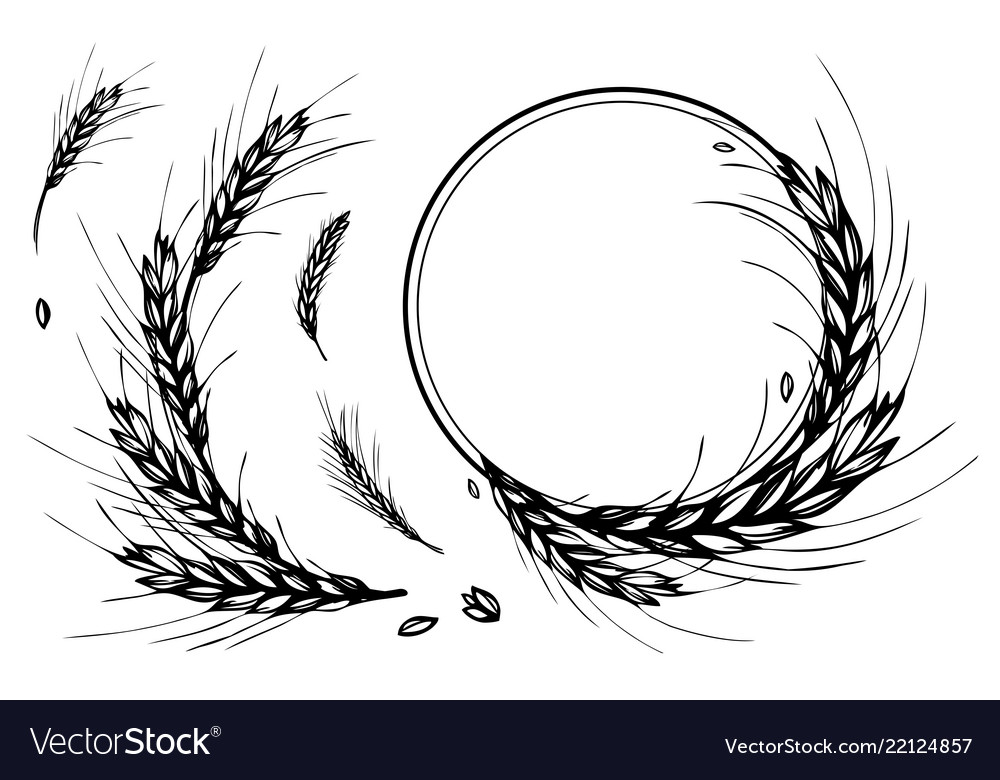 Wheat rye barley round frame or wreath