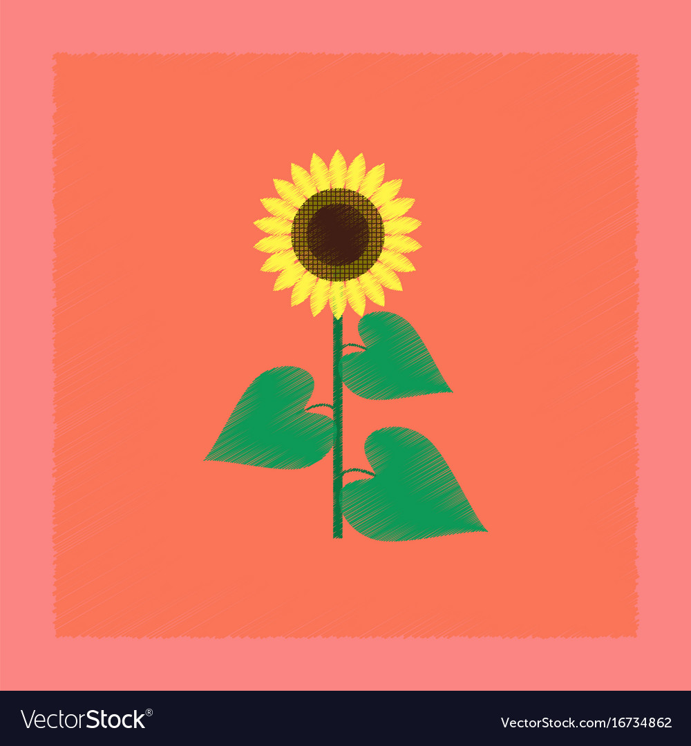 bright sunflower icon flat style