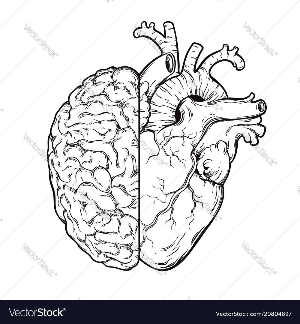 Hand drawn line art human brain and heart halfs