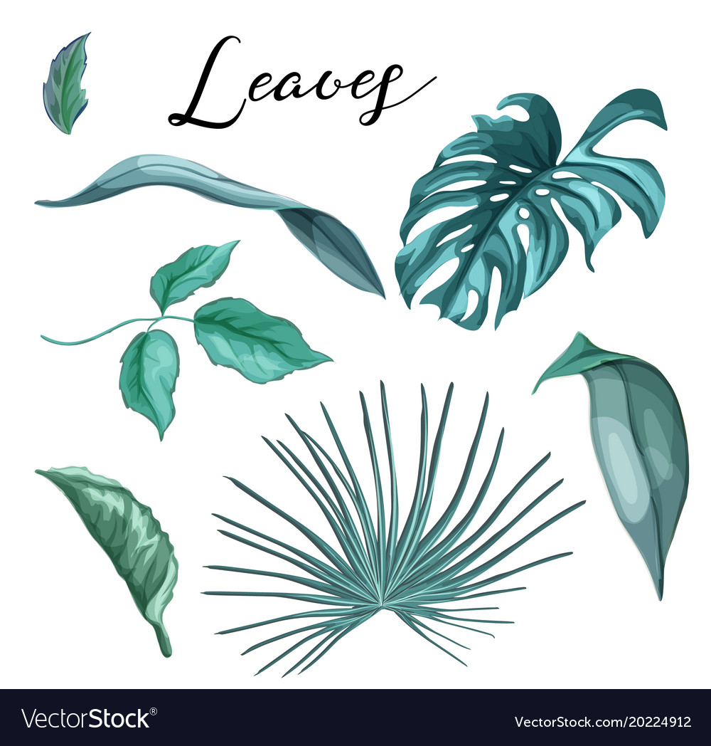 Tropical Exotic Leaves Summer Set Royalty Free Vector Image This is tropical and exotic flora. vectorstock
