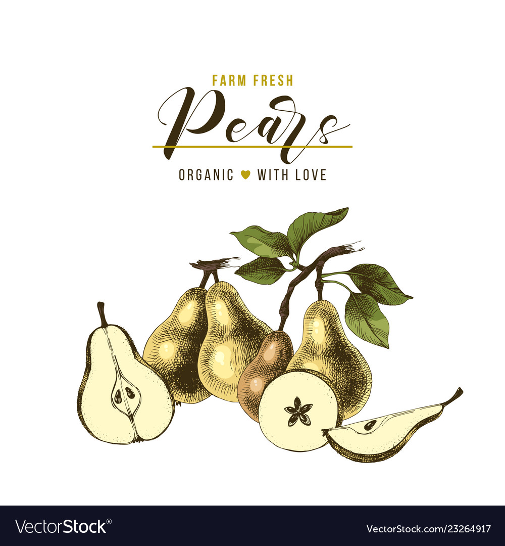 Farm fresh pears background with hand drawn fruits