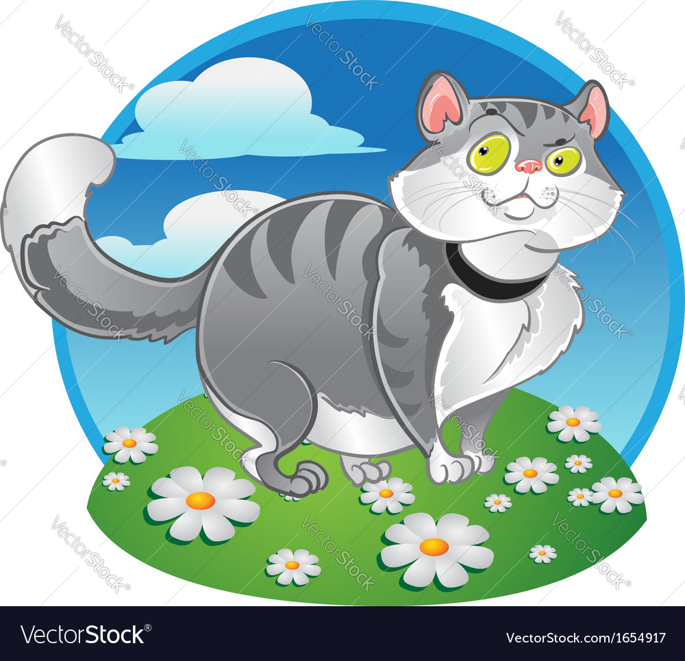 Grey fat cat on the color background