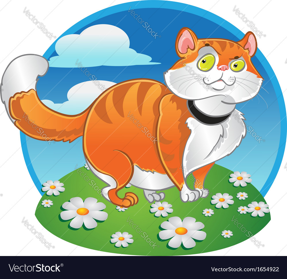 Orange fat cat on the color background
