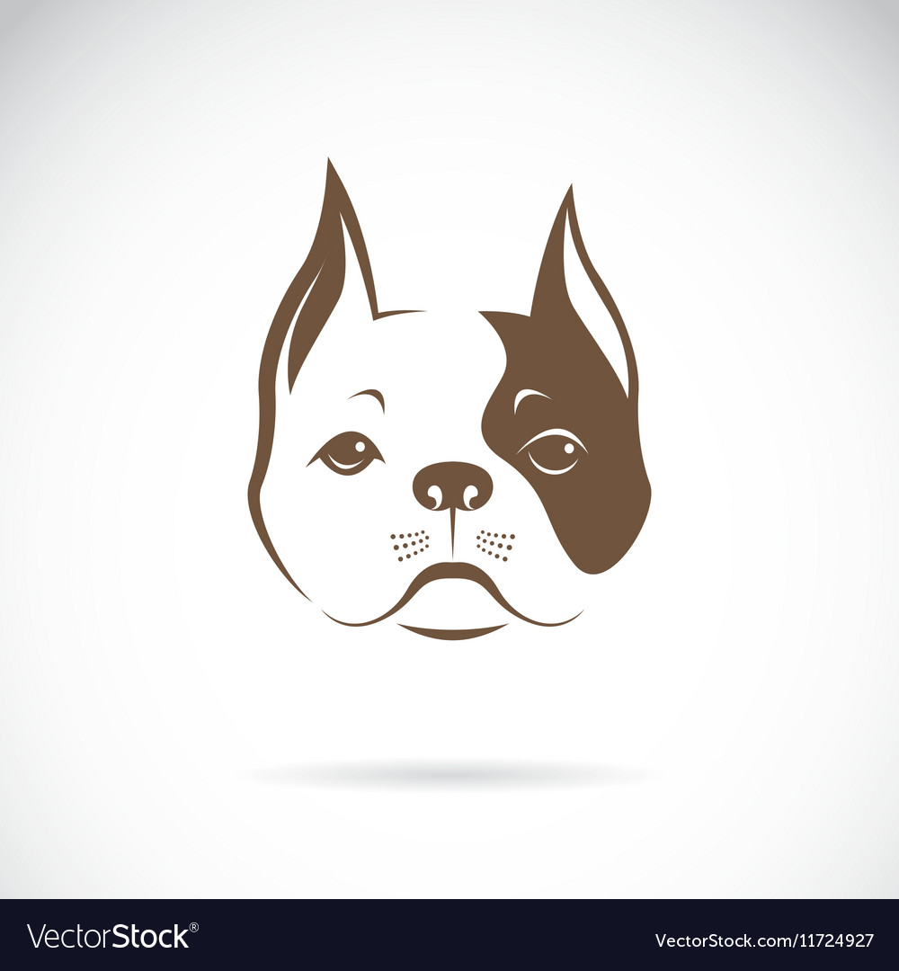 Dog face vector image