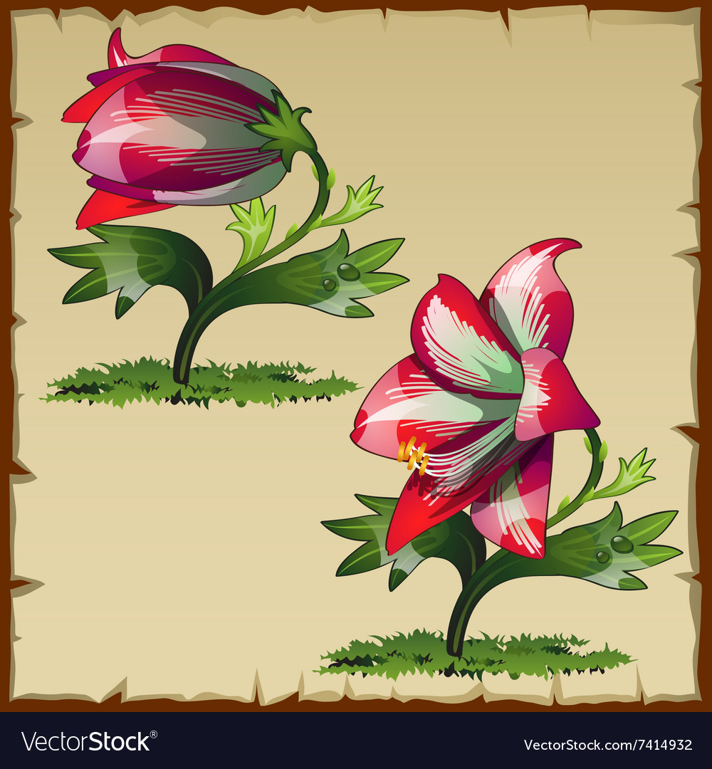 Unusual Picture Of Red Lily Flower Buds Royalty Free Vector
