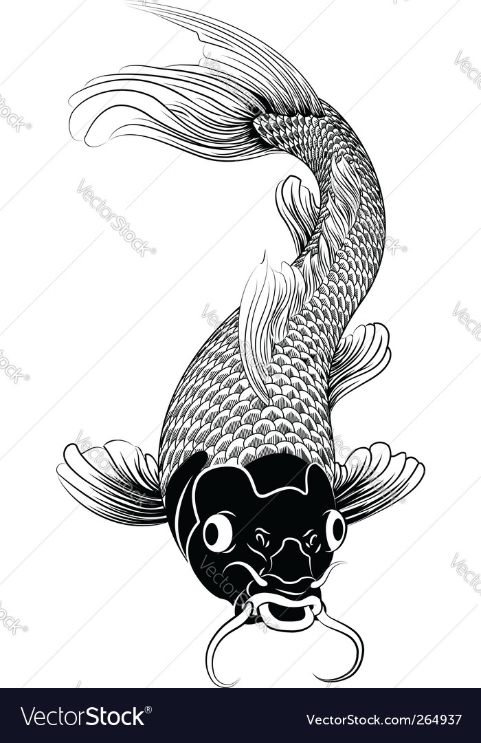 Kohaku koi carp fish illustration vector image