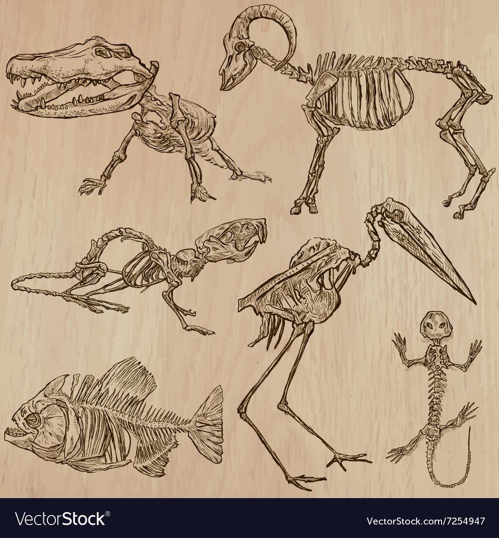 Bones Vector Anatomy Lizard Drawing Pictures Snake Skeleton Diagram Images Becuo Skulls Skeletons Freehands Royalty Free Image 1000x1079