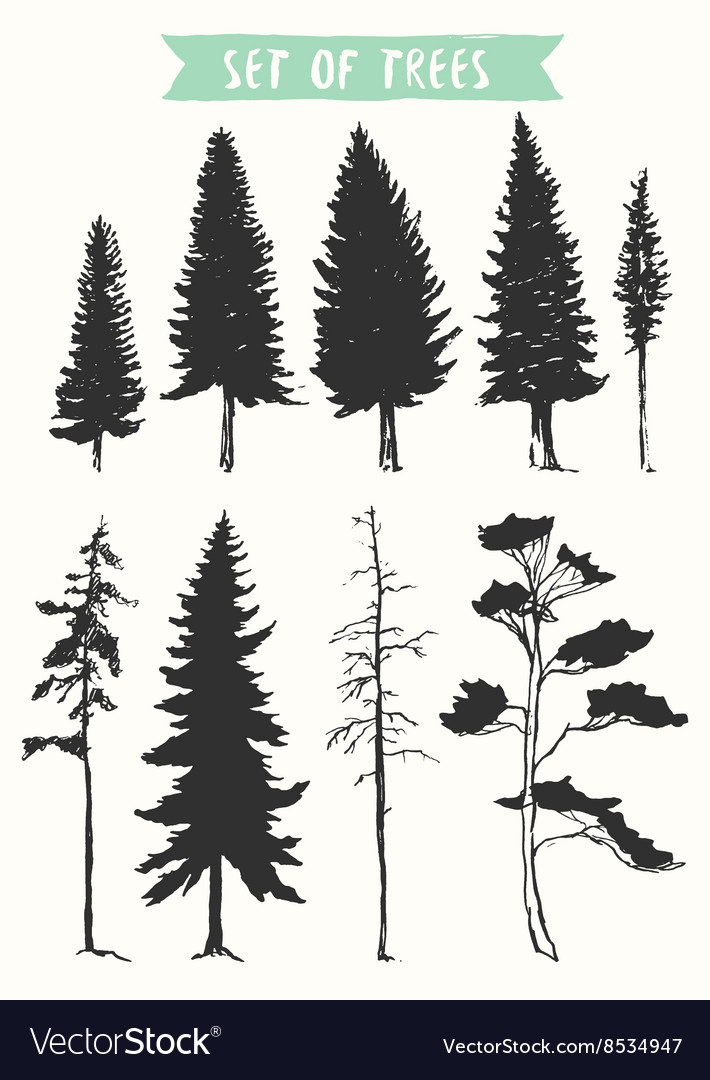 Hand drawn silhouette pine and fir trees