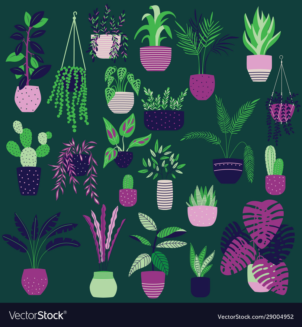 Collection hand drawn indoor house plants