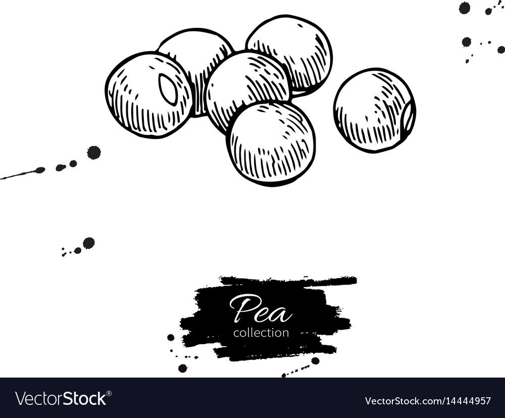 Pea beans heap hand drawn vector image