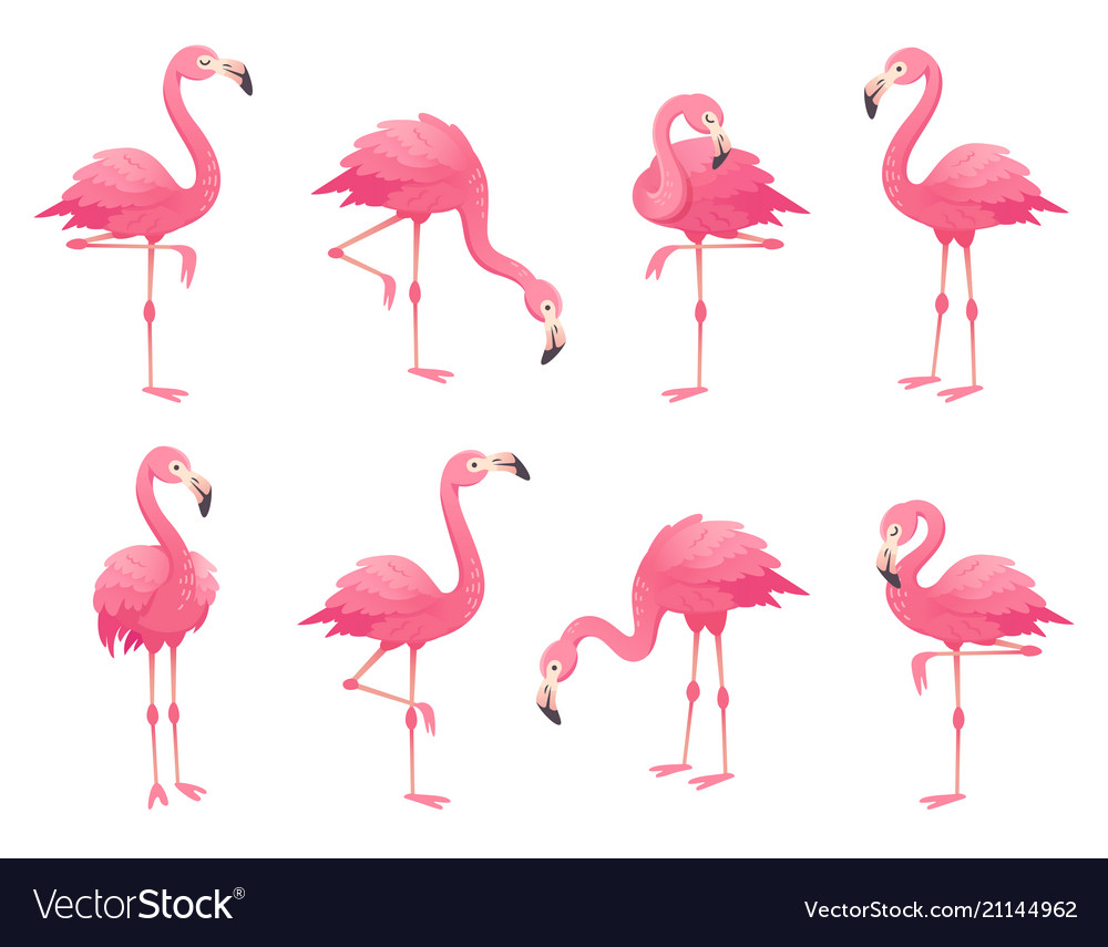 Exotic Pink Flamingos Birds Flamingo